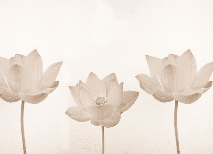 Фотообои Tenderness lotus